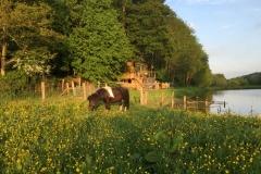 Vue de la Cabane Sauvage et de son étang